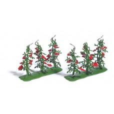 Busch 1239  6 Tomatenpflanzen